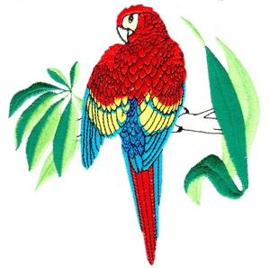 Parrot - large