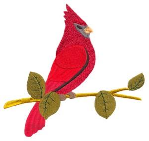 Cardinal (Square Hoop)