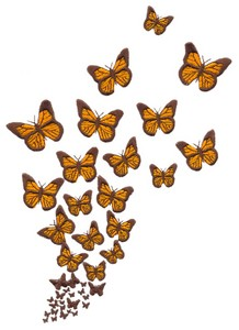 Large Butterflies (Square Hoop)