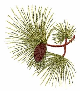 Alabama State Tree - Longleaf Pine