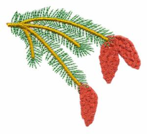 Alaska State Tree - Sitka Spruce