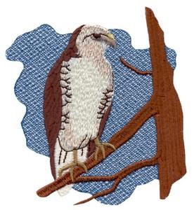 I'o Hawaiian Hawk