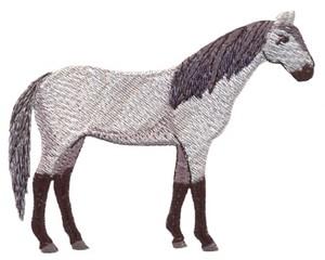 Black Socks Horse