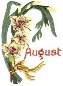August Gladiolus
