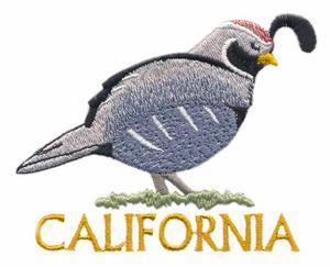 California State Bird - California Valley Quail