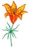 Saskatchewan Flower - Tiger Lily
